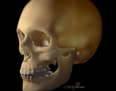 From X to Z: Taking X-ray CT Data from Osirix into ZBrush, AMI 2013