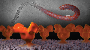 Ebola in 3D. Veronica Falconieri/Subramaniam Lab/CCR/NCI/NIH