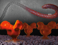 """Ebola in 3D"" in the NSF Vizzies!"