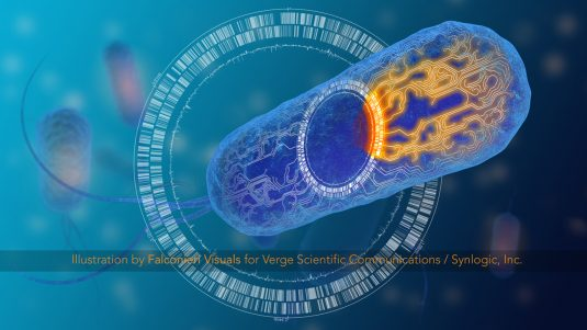 18057_Verge_Synlogic_Ecoli_Coverwatermark